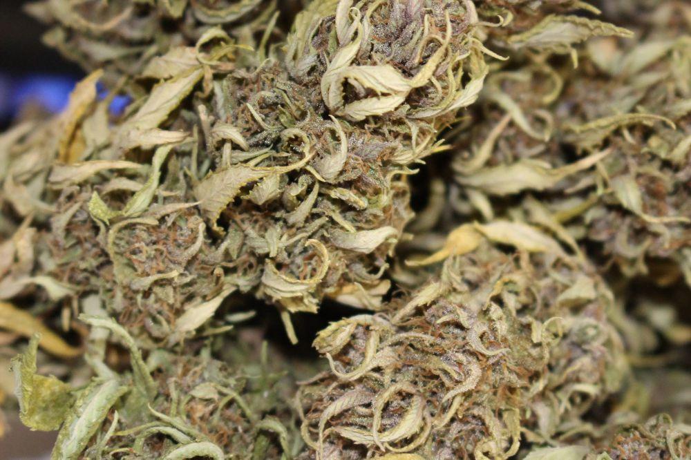 cannabis 2525100 1920