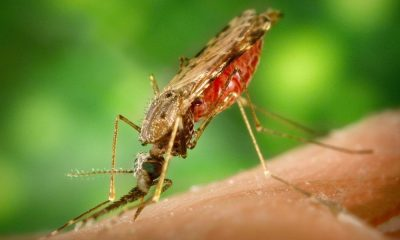 mosquito 1016254 1280