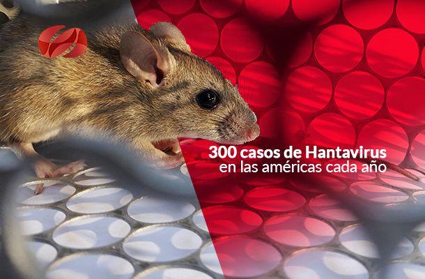 300 casos de hantavirus en las americas cada ano