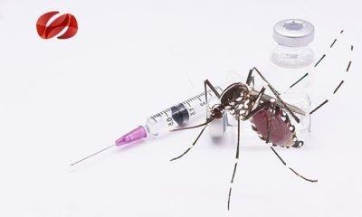 el dengue un problema de salud publica en la region de las americas
