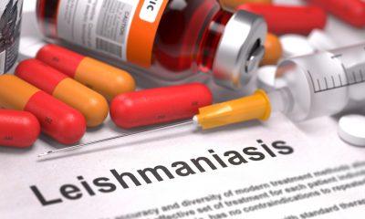 Cuatro moléculas con potencial para tratar la leishmaniasis: Estudio Unal