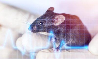 Enfermedades trasmitidas por animales