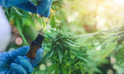 Primer producto legal de cannabis medicinal en Colombia ya está disponible para prescripción médica