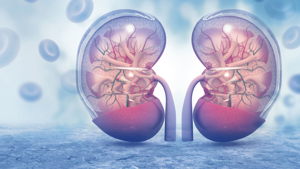 18 de junio día mundial del cáncer de riñón