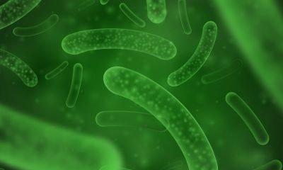 Científicos desarrollan primera super bacteria buena que ayuda al sistema inmune