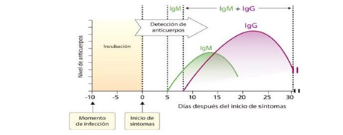 Representación de la cinética de producción de anticuerpos IgM e IgG contra SARS CoV 2