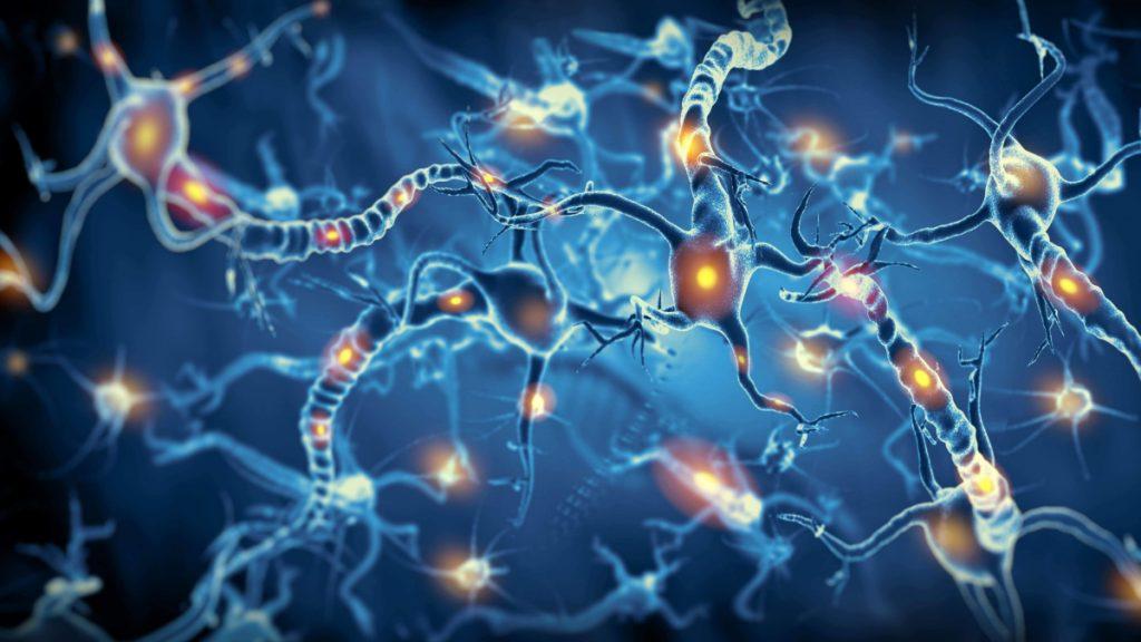 Científicos crean neuronas capaces de integrarse en el tejido cerebral