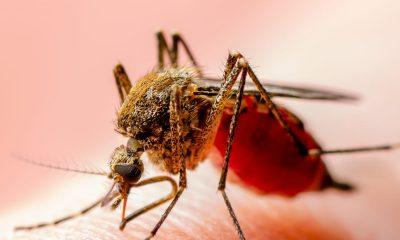 Colombia declara cierre de fase epidémica del Zika