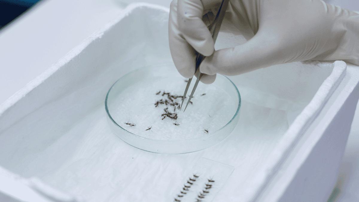 mosquitos-estados-unidos