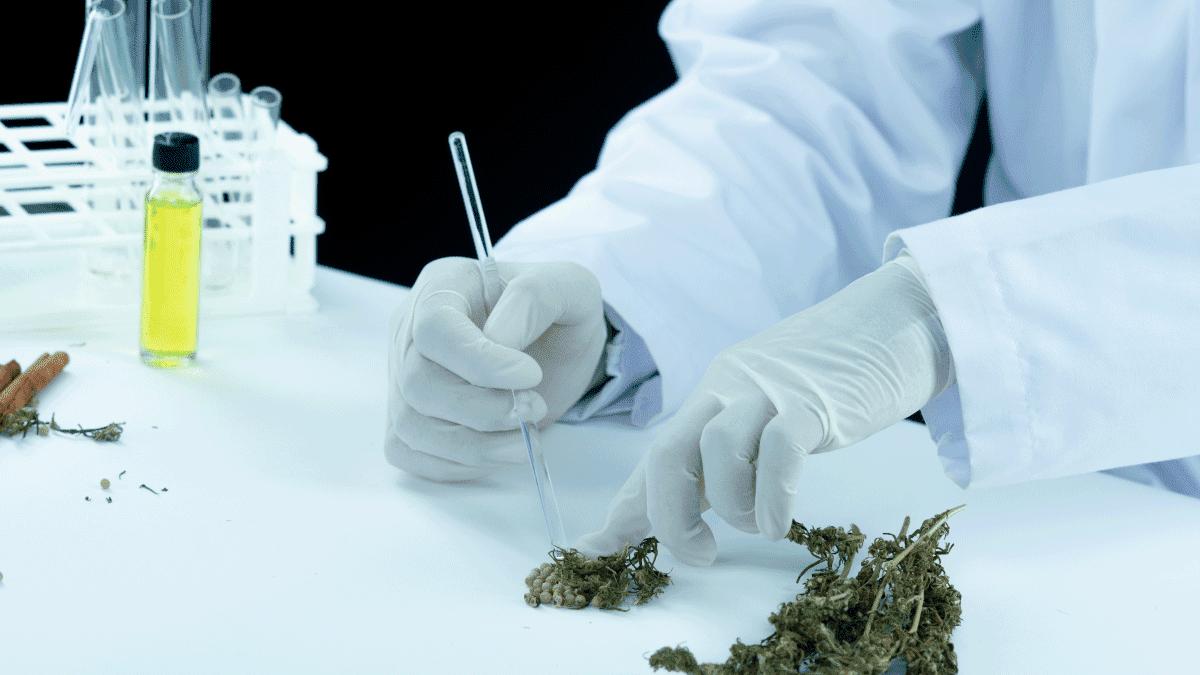 Cannabis artesanal en la epilepsia refractaria
