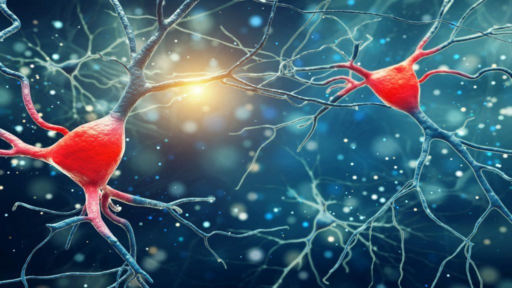Hallan nueva célula inmunitaria capaz de recuperar el tejido cerebral