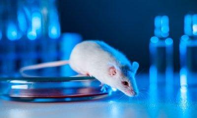 Con modelo experimental logran curar la Enfermedad Pulmonar Obstructiva Crónica -EPOC-