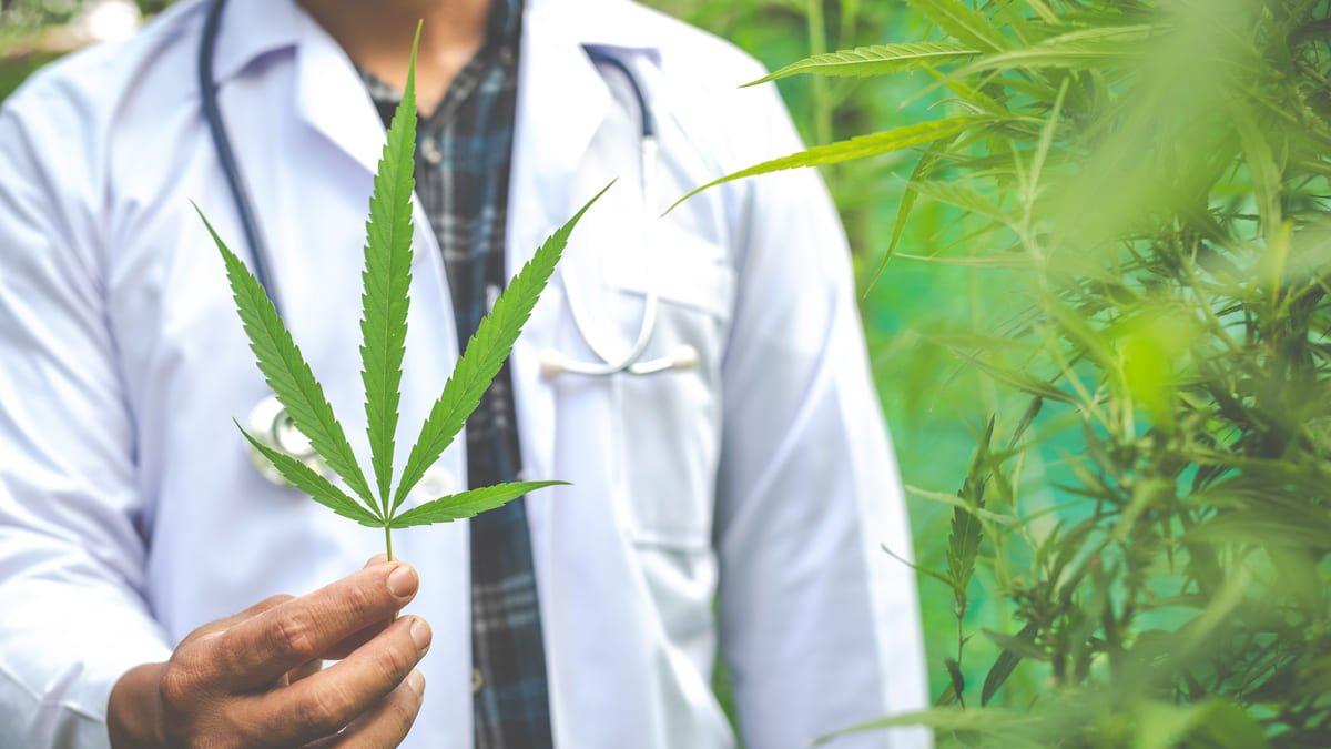Cannabis para uso medicinal, aprobado por la ONU