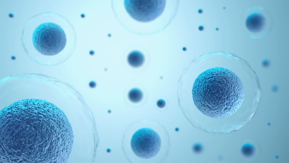 Crean células inmunes que mitigan la propagación del cáncer