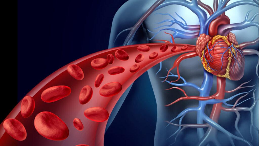 ¿Cómo afecta la hipertensión a los diferentes órganos del cuerpo