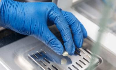 OMS advierte sobre la pobre capacidad mundial para la fabricación de antibióticos