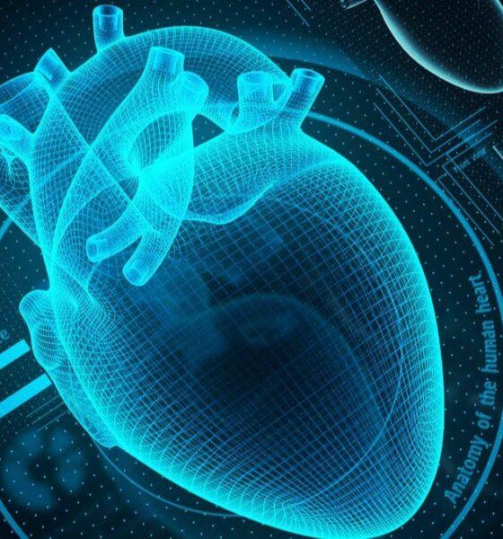 modelo corazon 3d enfermedades cardiacas