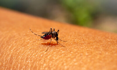 dengue duplica riesgo covid-19 sintomatica