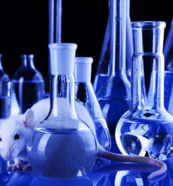Científicos logran eliminar el cáncer metastásico de ratones