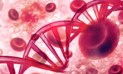 tener niveles elevados de grasas en sangre aumenta riesgo cancer