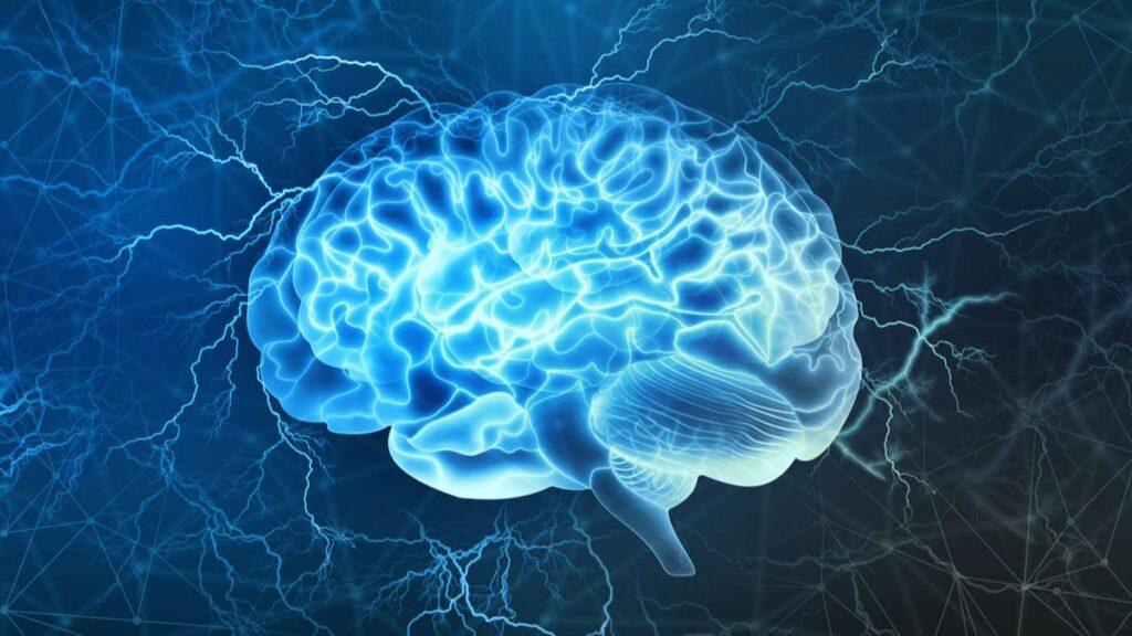 presentan circuito cerebral billones conexiones en 3D